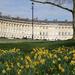 Daffodils on Royal Avenue by neiljforsyth