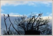 6th Mar 2020 - A little blue sky