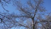 6th Mar 2020 - Blue Skies