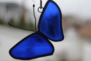 6th Mar 2020 - Blue Butterfly for rainbow2020