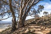 7th Mar 2020 - Centennial walking trail