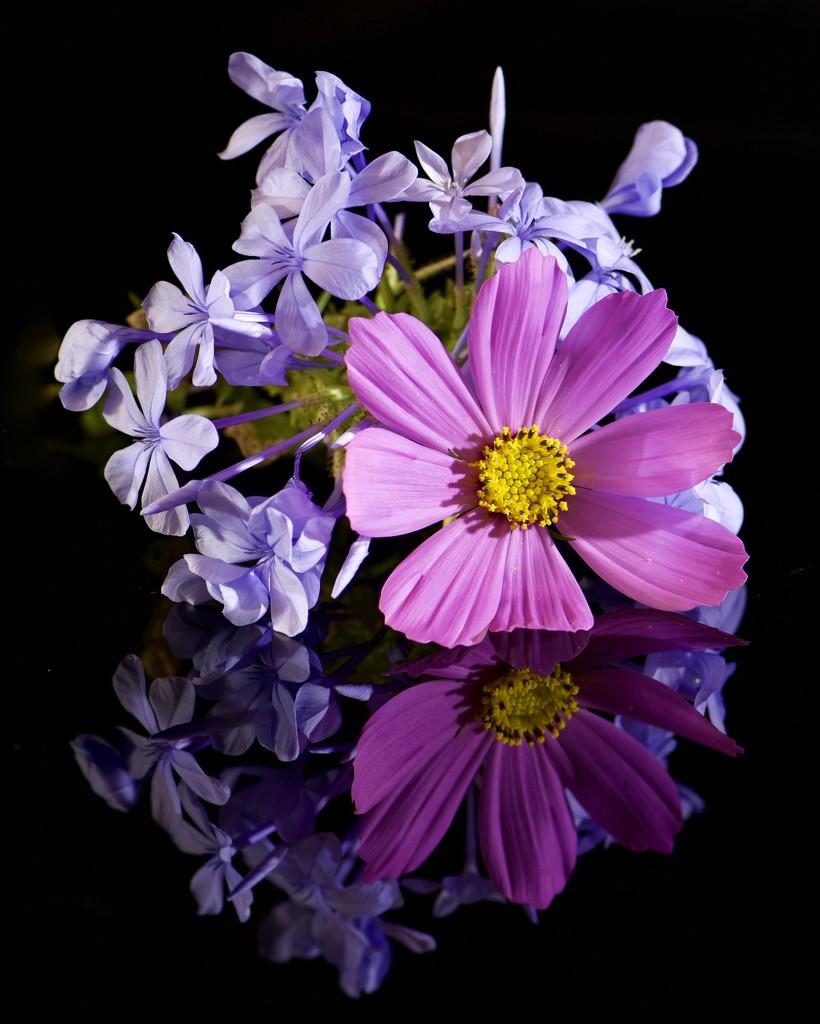 Reflected Flowers DSC_0837 by merrelyn
