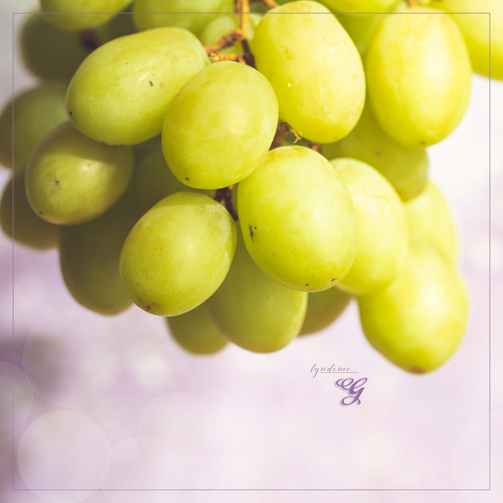 Grapes for G by lyndemc