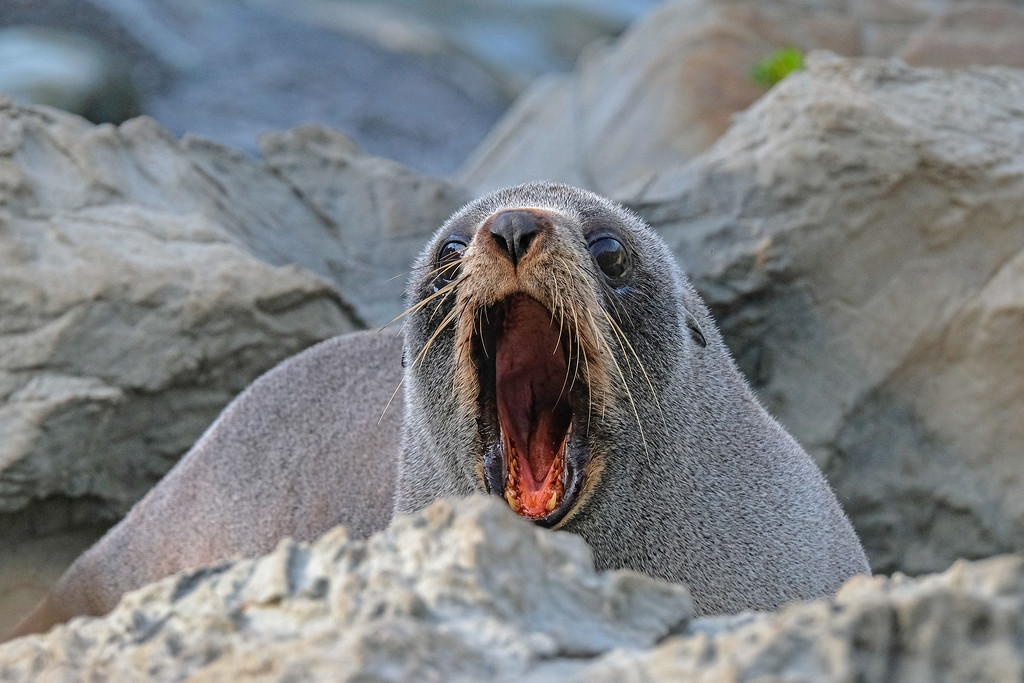 Yawn! by maureenpp