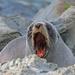 Yawn! by maureenpp
