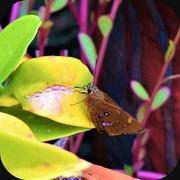 9th Mar 2020 -   Such a Pretty Moth ~
