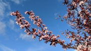8th Mar 2020 - Spring is on its way