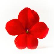 3rd Mar 2020 - Orange petals