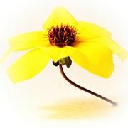 4th Mar 2020 - Yellow
