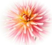 8th Mar 2020 - Pink