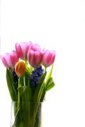 5th Mar 2020 - Bouquet