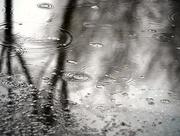 6th Mar 2020 - March Rain