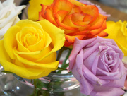 2nd Mar 2020 - Roses