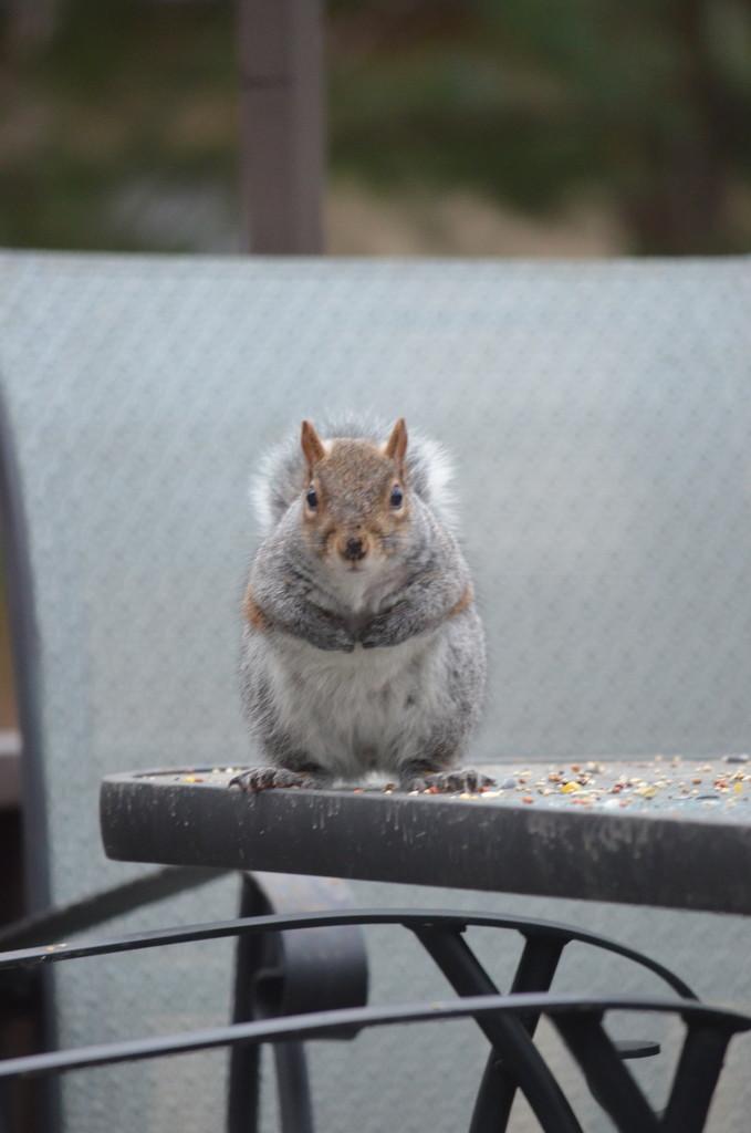 Got any nuts???  by kdrinkie