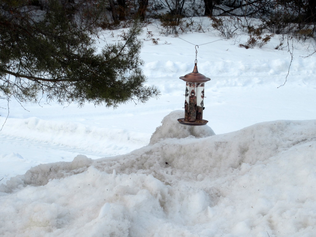 One more snow picture by bruni
