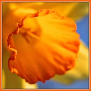 10th Mar 2020 - A Part is Orange
