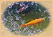 10th Mar 2020 - Goldfish