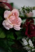 10th Mar 2020 - Roses