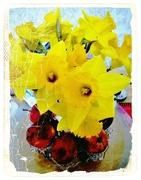 11th Mar 2020 - Daffodils