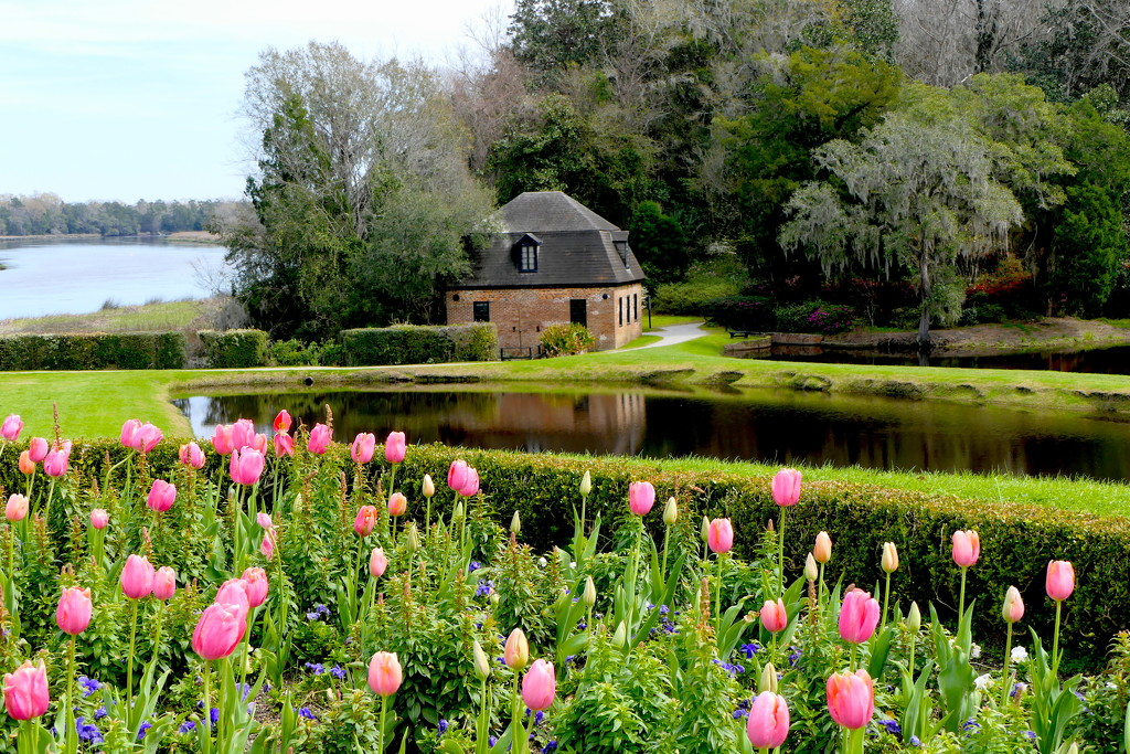 Plantation Gardens by redy4et