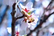 11th Mar 2020 - Pollinate