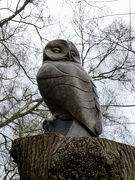 11th Mar 2020 - Owl