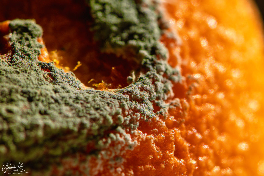 Mouldy Orange theme-depth by yorkshirekiwi