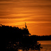 Blue Heron at Sunset  by radiogirl
