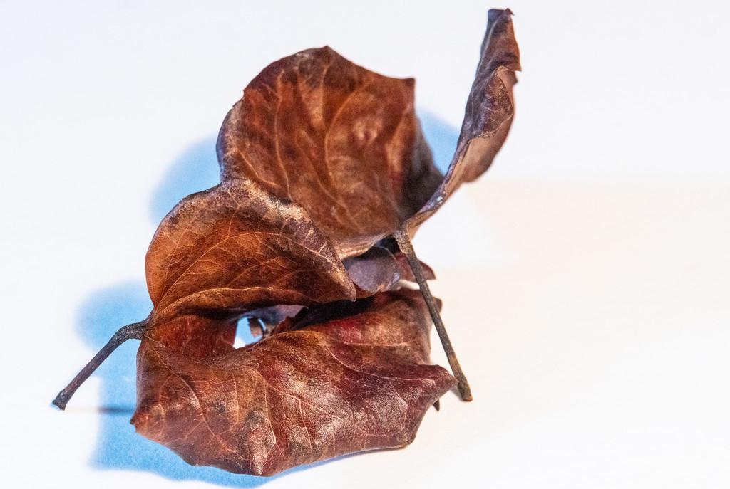 Leaves by randystreat