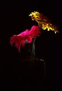 12th Mar 2020 - Floral Light