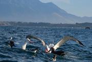 7th Mar 2020 - Albatross and petrels