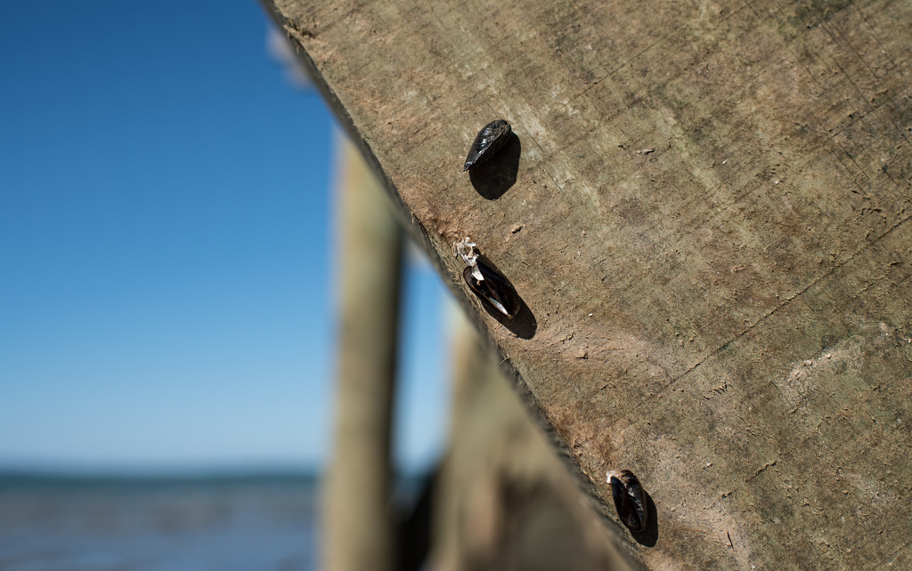 Life hangs delicately in the balance by brigette