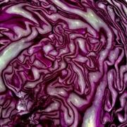 14th Mar 2020 - Purple-ish