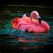 Flamingo Friday '20 09