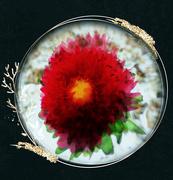 14th Mar 2020 - Red Flower Faff