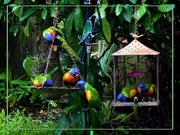15th Mar 2020 - A Colourful Picture ~