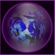 14th Mar 2020 - Deep purple