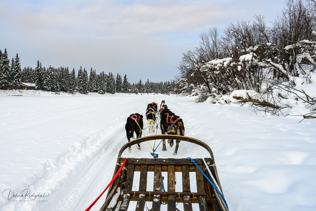View from our sled dog ride by dridsdale