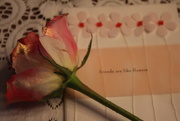 15th Mar 2020 - Pink Rose