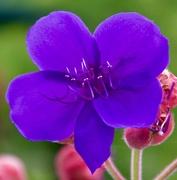 15th Mar 2020 - An Unknown Flower...DSC_6104