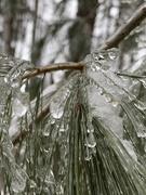 14th Mar 2020 - Teardrops of Ice