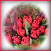 16th Mar 2020 - Red Tulips