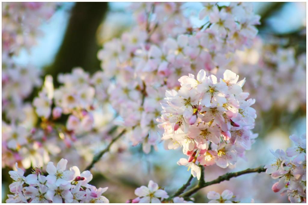 The nicest pink around by lyndamcg