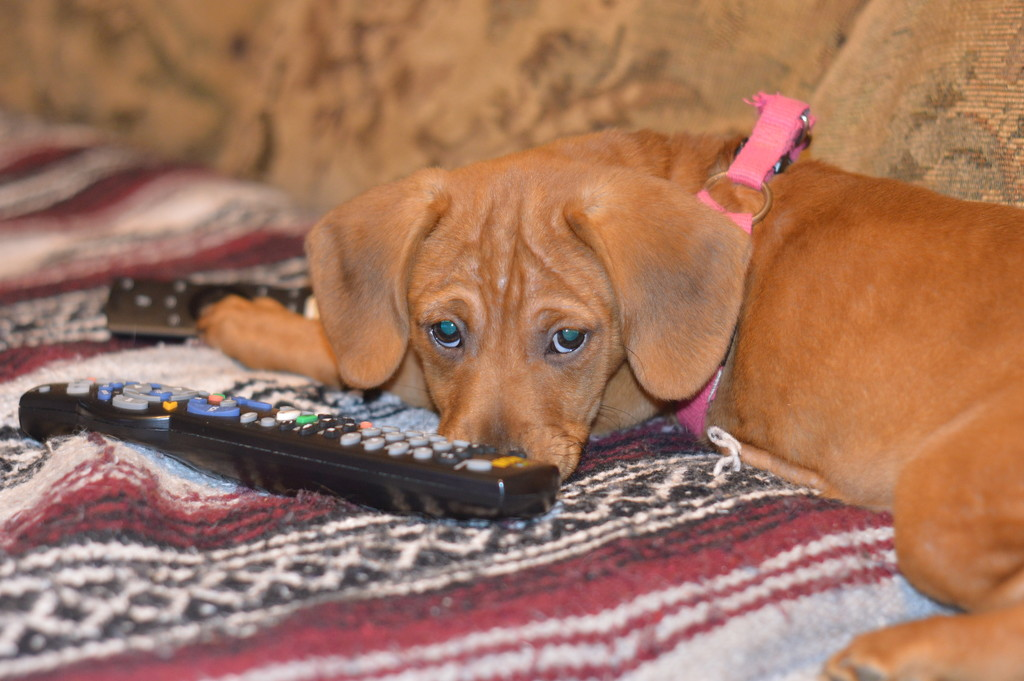 Keeper of the Remotes  by mej2011