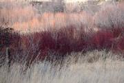 16th Mar 2020 - Red Brush - Rainbow2020