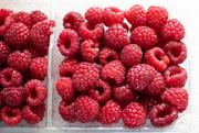 16th Mar 2020 - Red Raspberries