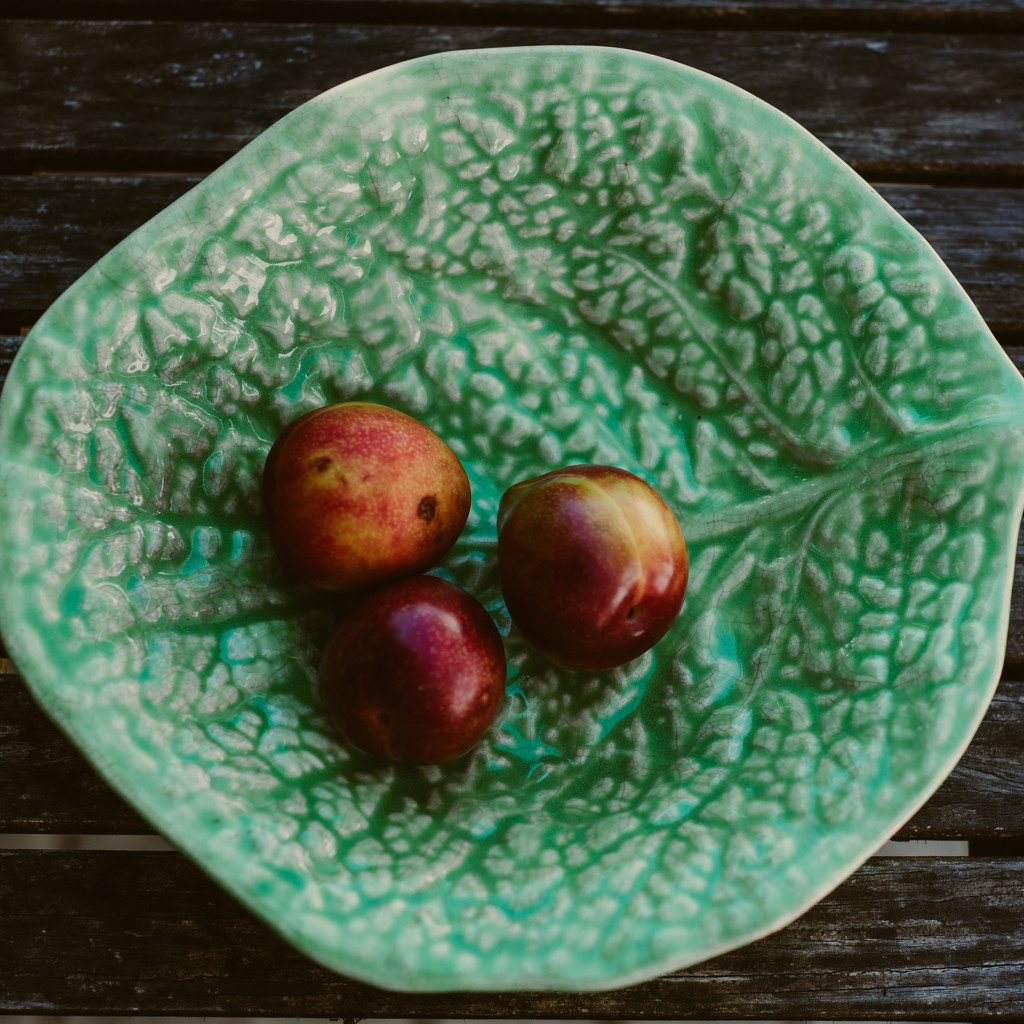 Plums on a plate by brigette