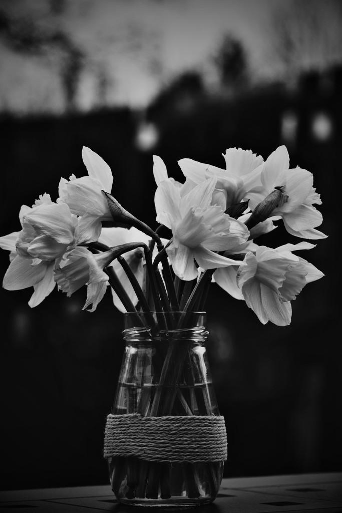 71-365 Signs of Spring by gailmmeek
