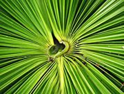 17th Mar 2020 - Tropical