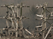 12th Mar 2020 - cormorants